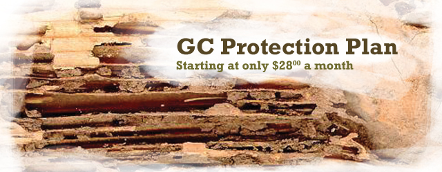 San Diego Professional Termite Control Solutions