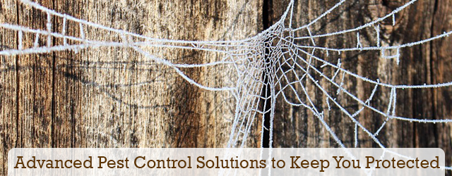 Advanced pest control solutions to keep you protected from GC Termite Control