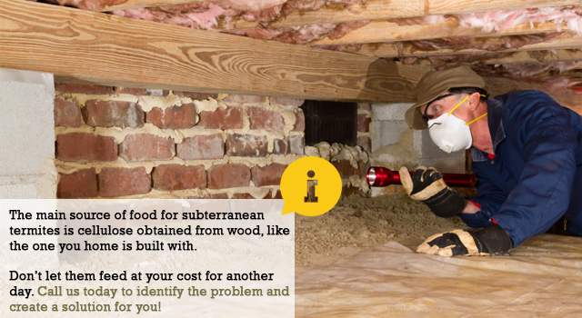 Subterranean Termite Control and Information