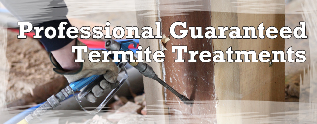 Professional Termite Control Treatment Methods