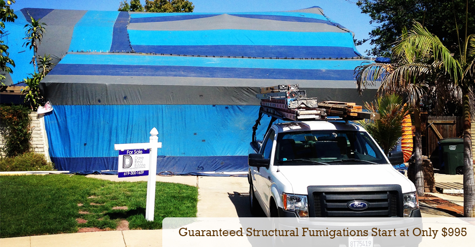Guaranteed Structural Fumigations start at only $995