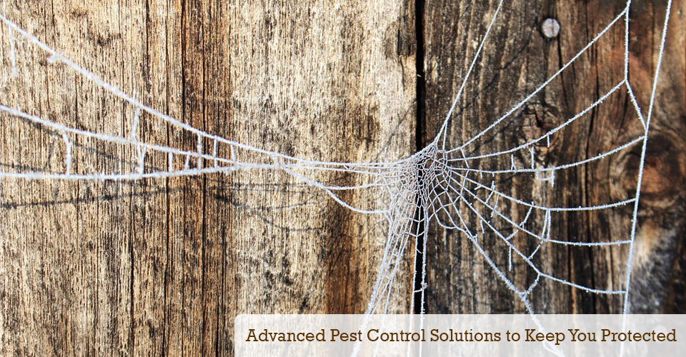 Advanced pest control solutions that will keep your family safe